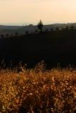 Haferfeld und -rolling Hills lizenzfreie stockfotografie