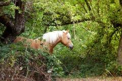 Haflinger horse waiting outside portrait royalty free stock image