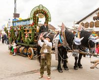 Haflinger Horses pulling beer barrels at Oktoberfest. MUNICH, GERMANY - SEPTEMBER 19: People posing in front of the horses pulling beer barrels on the royalty free stock image