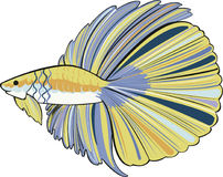 Hafmoon betta yellow and blue Royalty Free Stock Photo