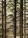 Hafren las, Llanidloes zdjęcia royalty free