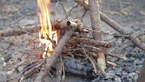 Haga el fuego afuera en bosque metrajes