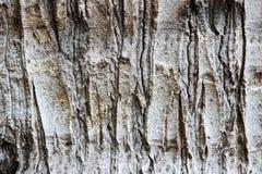 Haga fragmentos de la corteza del árbol viejo Fotografía de archivo libre de regalías