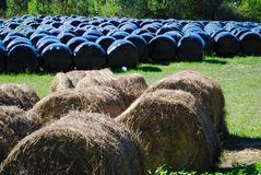 Haga heno en el campo, región de Dordoña, d'Estissac del St Severin Imagen de archivo