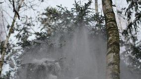 Haga sacudida el árbol nevado en el bosque en el invierno en slowmo metrajes