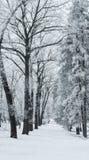 haga un túnel entre los árboles cubiertos con blanco del negro de la helada Fotografía de archivo