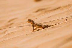 Hagedis in de woestijn op het gele zand stock afbeelding