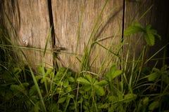 Hagedis in het gras royalty-vrije stock foto's