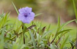 Hagedis het Verbergen onder Purpere Bloemen Royalty-vrije Stock Afbeelding