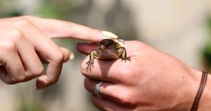 Hagedis mooi veelkleurig dier in menselijke handen, kleurrijk reptiel in Bali Idonesia stock afbeeldingen