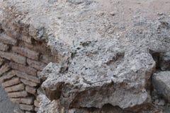Hagedis op de rots Stock Fotografie