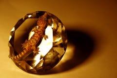 Hagedis op diamant Royalty-vrije Stock Foto's