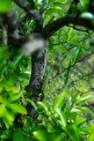 Hagedis op een boom Royalty-vrije Stock Foto