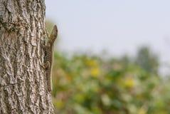 Hagedis op een boom stock afbeelding