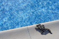 Hagedis op pool stock foto