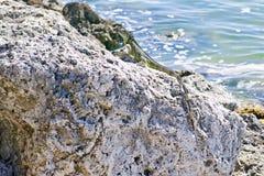 Hagedis op zee Rots op Nr 1 de Weg van de staat aan Key West Royalty-vrije Stock Foto