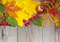 Hagedornasche und -apfel in der Herbstzusammensetzung Stockfotos