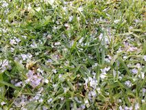 hagel Royaltyfria Bilder