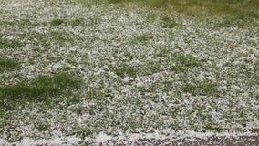 Hagel die op groen gras vallen stock videobeelden