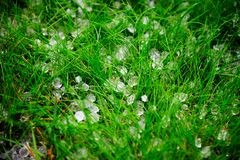 Hagel nach Sturm auf Gras Stockbild