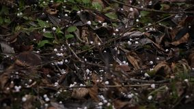 Hagel och snö som faller på jordningen arkivfilmer