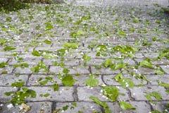Hagel und Blätter Stockfoto