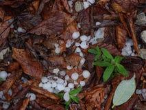 Hagelstenen tussen bladeren stock afbeeldingen