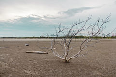 Haggard tree On dry land Stock Image
