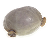 Haggis isolated on white Royalty Free Stock Photos