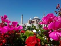 Hagia Sofía de la mezquita con las flores fotos de archivo libres de regalías