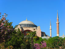 Hagia Sophia behind the trees. Hagia Sophia behind blossomed trees in spring in Istanbul Stock Photos