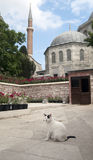 Hagia Sophia in Istanbul Stock Photos