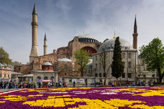 Hagia Sophia And Tulips In Istanbul Turkey Royalty Free Stock Image
