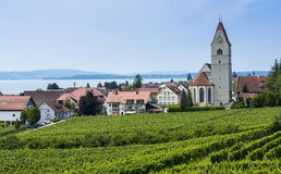 Hagnau - Lake Constance, Baden-Wuerttemberg, Germany, Europe. Catholic Church St. Johann Baptist in Hagnau at Lake Constance with vitaceous in the foreground Royalty Free Stock Images