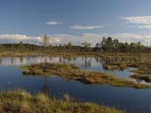 Hags in a marsh Royalty Free Stock Photo