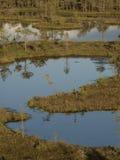 Hags in a marsh Stock Photos