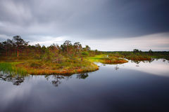Hags in a marsh royalty free stock image