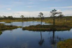 Hags no pântano de Kakerdaja Imagens de Stock