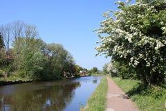 Hagtornblomning, Leeds och Liverpool kanal Royaltyfria Foton