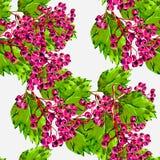 Hagtornrosa färger, grön bakgrundsvattenfärg för filial Arkivbilder