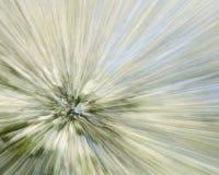 Hagtornträd - abstrakt zoomande bakgrund Arkivfoto