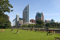 The Hague Stock Photos