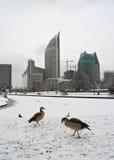hague vinter Arkivbild