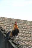 Hahn auf Dachspitze Lizenzfreie Stockfotos