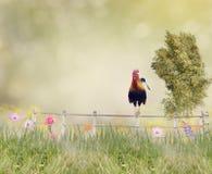 Hahn auf einem Zaun Stockbild