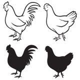 Hahn (Brandhahn) und Huhn Lizenzfreies Stockbild
