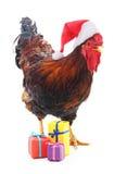 Hahn in der Kappe Sankt mit Geschenken Lizenzfreies Stockfoto