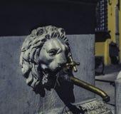 Hahn mit dem Kopf Lucca, Italien eines Löwes stockfotos