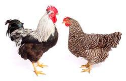 Hahn und Huhn auf weißem Hintergrund Stockfotos