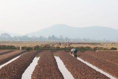 HAI DUONG, VIETNAM, il 18 ottobre: agricoltori che crescente le verdure nella t Fotografia Stock Libera da Diritti